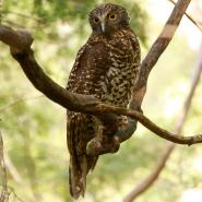 Safeguard our wildlife